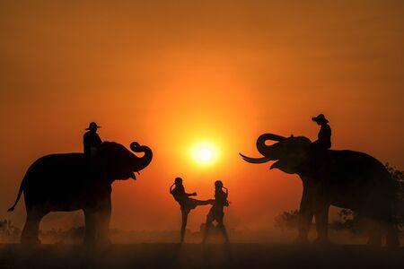 Photo pour Silhouette light with boxers and elephants fighting. Boxing Fighting with elephants is the background. Krapho, Tha Tum District, Surin, Thailand. - image libre de droit