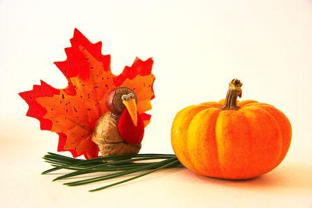 Photo for Tiny Turkey and Mini Pumpkin  - Royalty Free Image