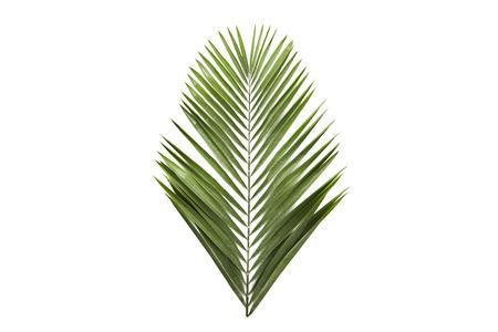 Photo pour green palm leaf branches on white background. flat lay, top view - image libre de droit