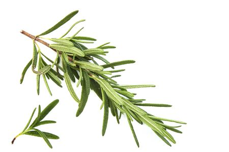 Photo pour fresh raw rosemary on white background, top view - image libre de droit