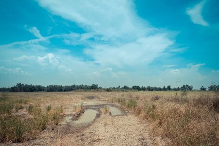 Rice field with dry soil and blue sky