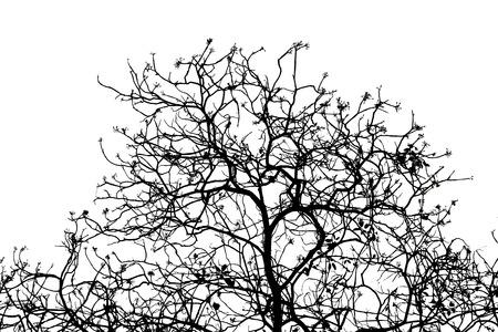 Photo pour Bare tree branches silhouette on a white background. - image libre de droit