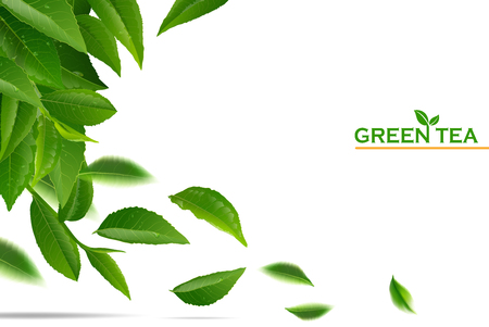 Unduh 570 Koleksi Background Banner Natural Green HD Terbaru