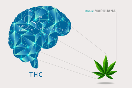 Marijuana brain and cannabis consumer symbol as a human face made of weed leaves as a pot or herbal medicine patient and effects on psychology or drug dealer concept in a paragon illustration style.