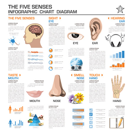 The Five Senses Infographic Chart Diagram Vector Design Template
