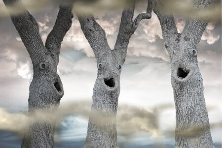 Three trees  with funny scary faces in a misty forest
