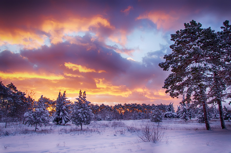 winter scene, snow forest at dawn, multicolored sky at sunrise
