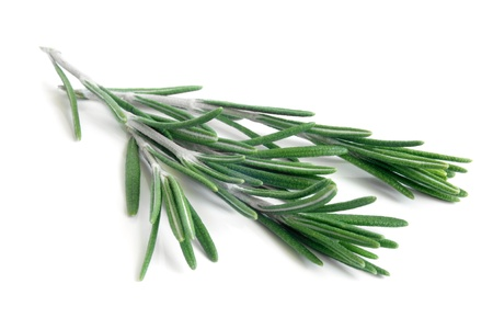 Photo for Fresh rosemary on a white background - Royalty Free Image