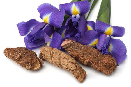 Photo for Iris rhizome and flowers on white background - Royalty Free Image