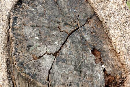 Wooden stump background