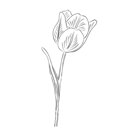 Illustration pour Hand drawn  outline tulip flower isolated on white background, vector format - image libre de droit