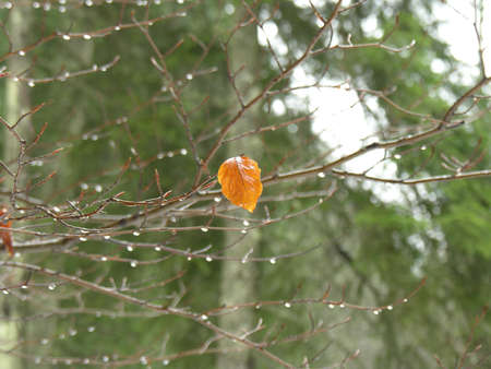 Single leaf in winter forest