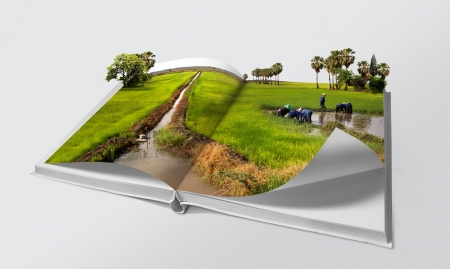 Photo pour Open book in green rice fields - image libre de droit