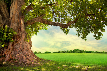 Photo pour Spring meadow with big tree with fresh green leaves - image libre de droit