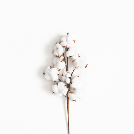Foto per Flowers composition. Cotton flowers on white background. Flat lay, top view, square - Immagine Royalty Free