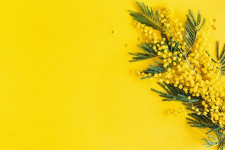 Photo for Flowers composition. Mimosa flowers on yellow background. Spring concept. Flat lay, top view - Royalty Free Image