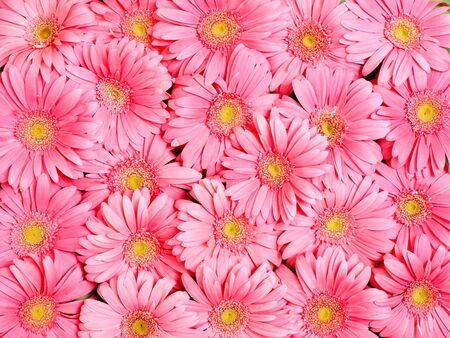 Background of gerbera flower.
