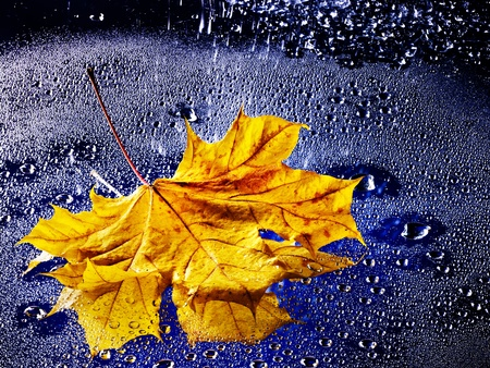 Yellow autumn leaf floating on water with rain.の写真素材