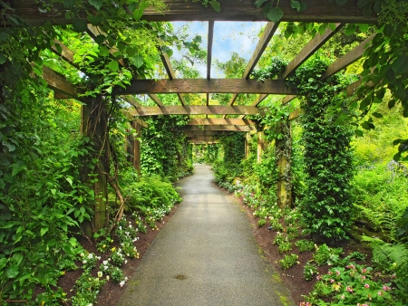 Pergola passage in the garden, surrounded by wisteria and climbing plants