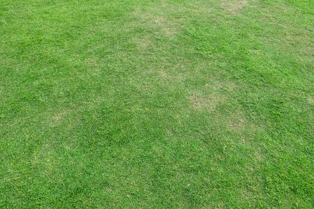 Foto de Green grass texture for background. Green lawn pattern and texture background. Close-up. - Imagen libre de derechos