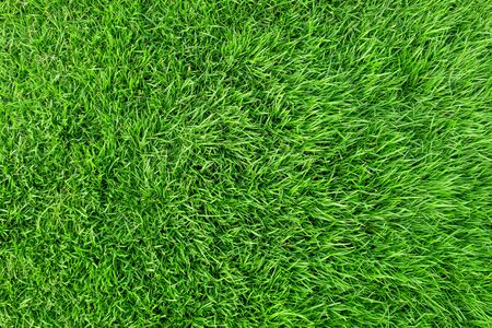 Photo pour Green grass texture for background. Green lawn pattern and texture background. Close-up. - image libre de droit