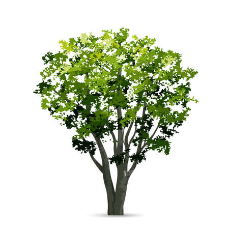 Illustration pour Tree isolated on white background. Use for landscape design, architectural decorative. Park and outdoor object idea. Vector illustration. - image libre de droit
