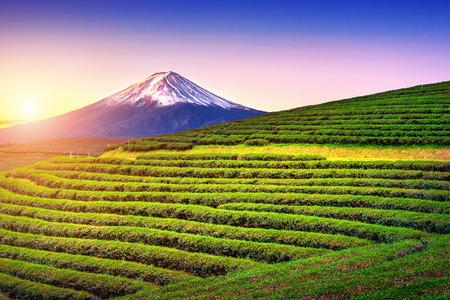 Foto de Green tea fields and Fuji mountain in Japan. - Imagen libre de derechos
