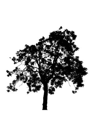 Photo pour tree silhouettes beautiful isolated on white background - image libre de droit
