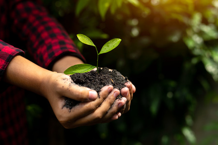 Foto de Hand holding plant with bokeh and nature background, save the world and World Environment Day concept at sunny day. - Imagen libre de derechos