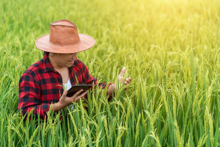 Foto für Asian young farmers is using the research tablet and studying the development of rice varieties in the field. To increase the productivity. Agriculture technology concept. - Lizenzfreies Bild