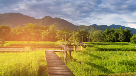 Photo pour Wooden walking path over rice field with mountain background - image libre de droit