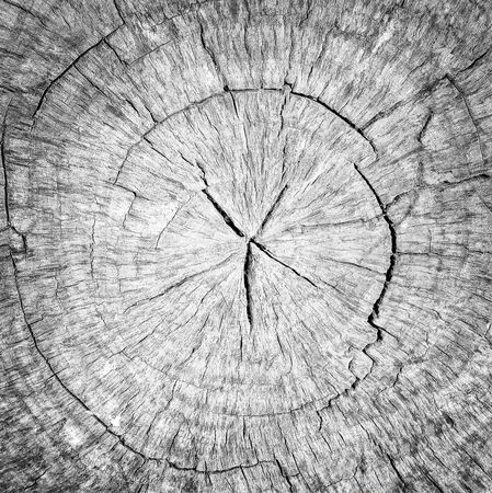 Foto de Round cut down tree with annual rings, Old gray Wood texture abstract background - Imagen libre de derechos