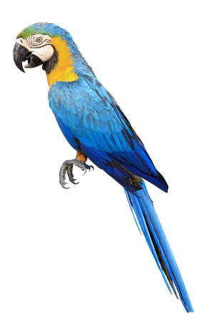 Colorful blue parrot macaw in zoo