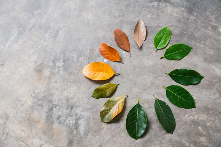 Change season concept green leaves to dry leaves on cement background