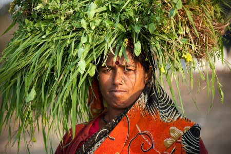 Indian happy villager woman carrying green grass home for their livestock
