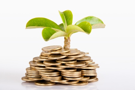 Photo pour Pile of money  indian coin   isolated on white background under tree or plant - image libre de droit