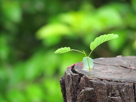 A new beginning - regrowth