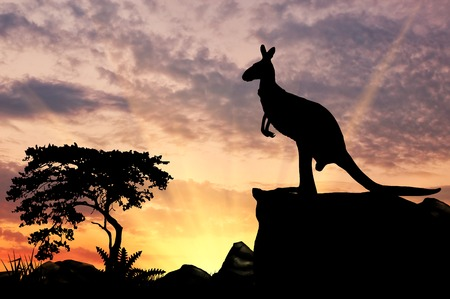 Silhouette of a kangaroo on a hill at sunset