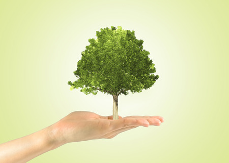 Concept of growth potential in the business. Miniature tree in a human hand