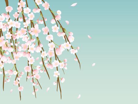 柳の木の写真イラスト画像素材 Foryourimages