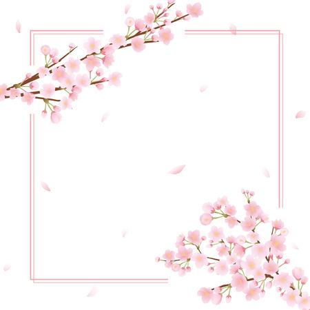 Illustration pour Cherry blossom vector frame on plain presentation. - image libre de droit