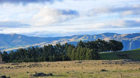 Waitaki Valley field and mountains in New Zealand