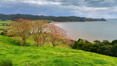 Duder Regional Park, a coastal farm park next to Hauraki gulf in New Zealand