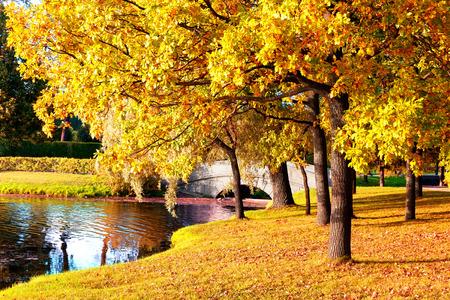 Beautiful autumn forest in park \' Pushkin, Saint Petersburg, Russia