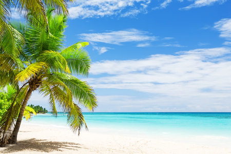 Photo pour Coconut Palm trees on white sandy beach in Punta Cana, Dominican Republic - image libre de droit