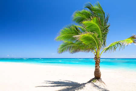 Photo pour Coconut palm tree against blue sky and beautiful beach in Punta Cana, Dominican Republic. Vacation holidays background wallpaper. View of nice tropical beach. - image libre de droit