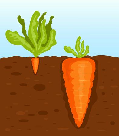 Ilustración de Big and small carrot. Vector flat cartoon illustration - Imagen libre de derechos