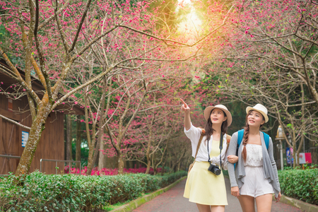 Foto de portrait of two young female friends walking on the sakura blossoming path looking and pointing copyspace beautiful view share for sister together strolling along a cherry flower trees. - Imagen libre de derechos