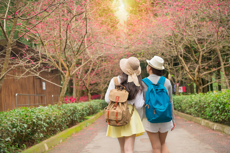 back view of tourist travel women walking watching cherry blossom at sakura park walkway in the Japan. asian girlfriends looking at beautiful pink flowers with copyspace.