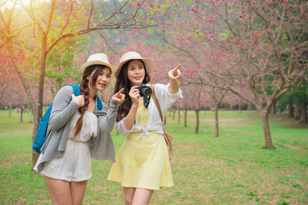 young female backpackers pointing beautiful sakura flowers and holding camera taking picture on famous cherry blooming tree park in japan travel vacation.の写真素材
